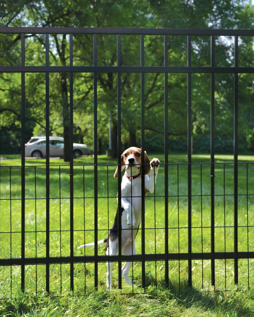 Best Pet Fence For Big Dogs