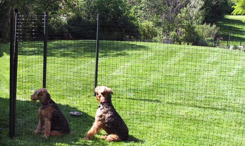North Va Dog Fence Contractor Installation Services